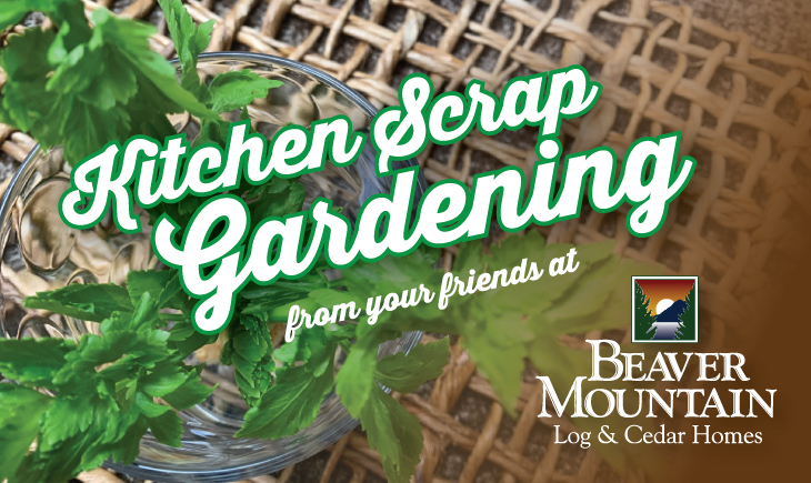 Beaver Mountain Kitchen Scrap Gardening