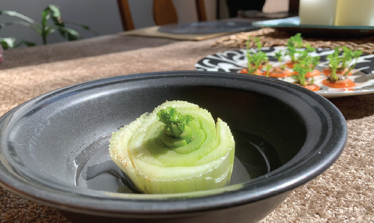 Celery Kitchen Scrap Gardening